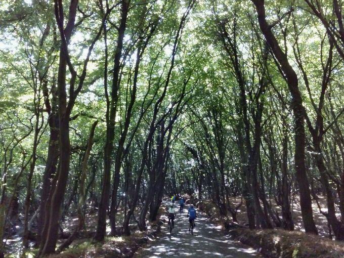 Riding through magical Brickett Wood