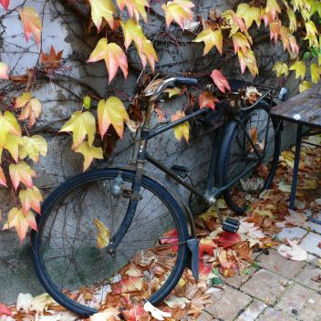 Photo for Autumn Years Cyclists (Cleethorpes)