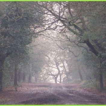 Photo for Sutton Park